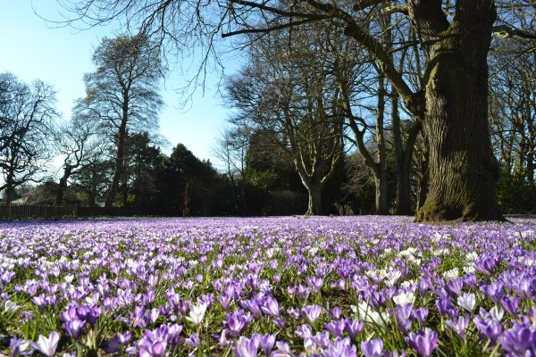 Corsehill Park and Gardens